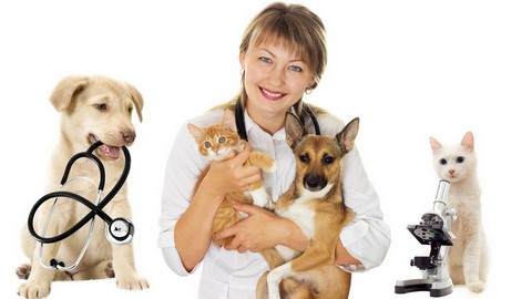 health for pet porto seguro